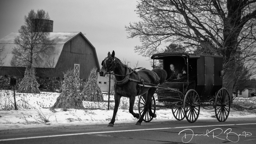 AMISH-CARRIAGE-IN-MORLEYweb