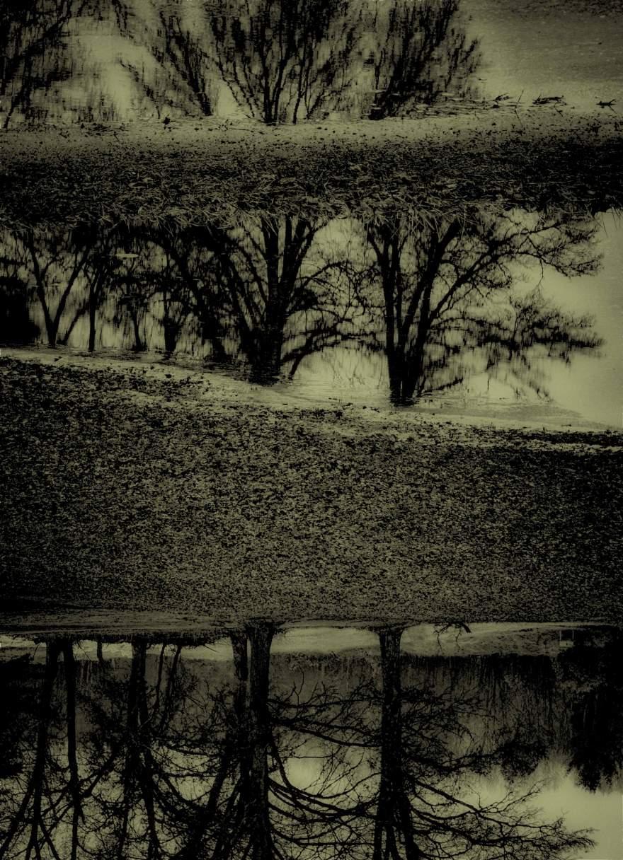 TREES-IN-3-LAYERS-b&wweb.jpg
